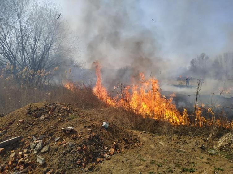 В Виннице возле Вишенского озера произошел масштабный пожар (фото), фото-1