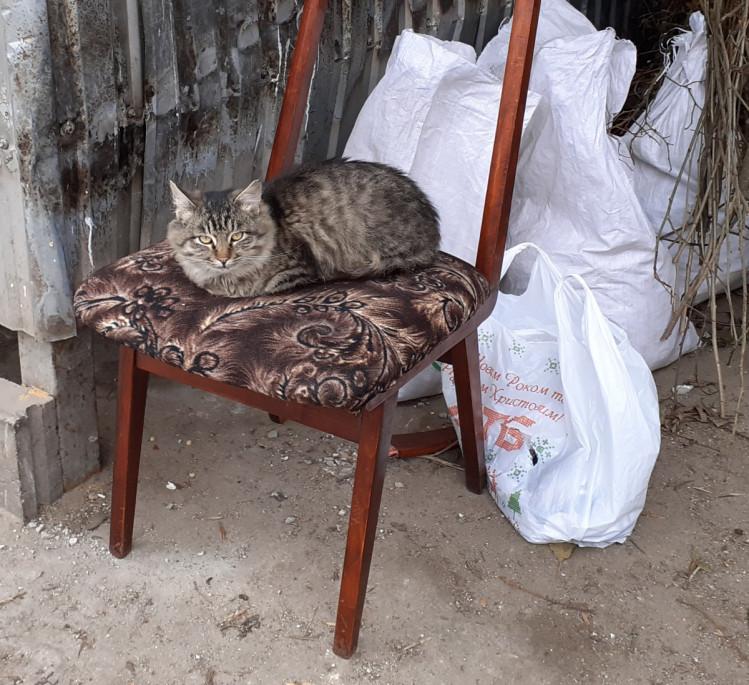 Навіть на смітнику можна влаштуватися з комфортом. Фото: Валентина Пустіва
