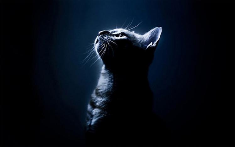 Як можна не любити котів? Фото: соцмережі
