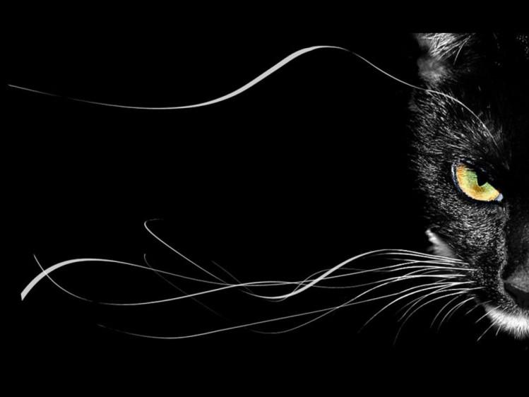 Коти приносять тільки щастя. Навіть чорні і дуже чорні. Фото: соцмережі