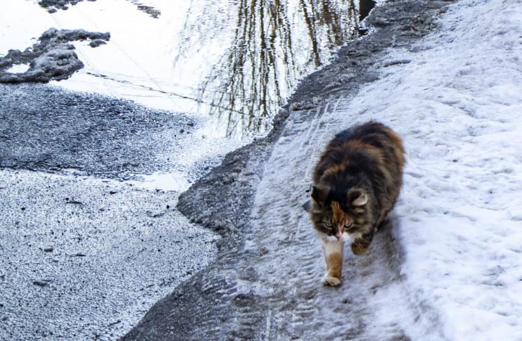 Обхід території. Фото: Сергій Бахмутов