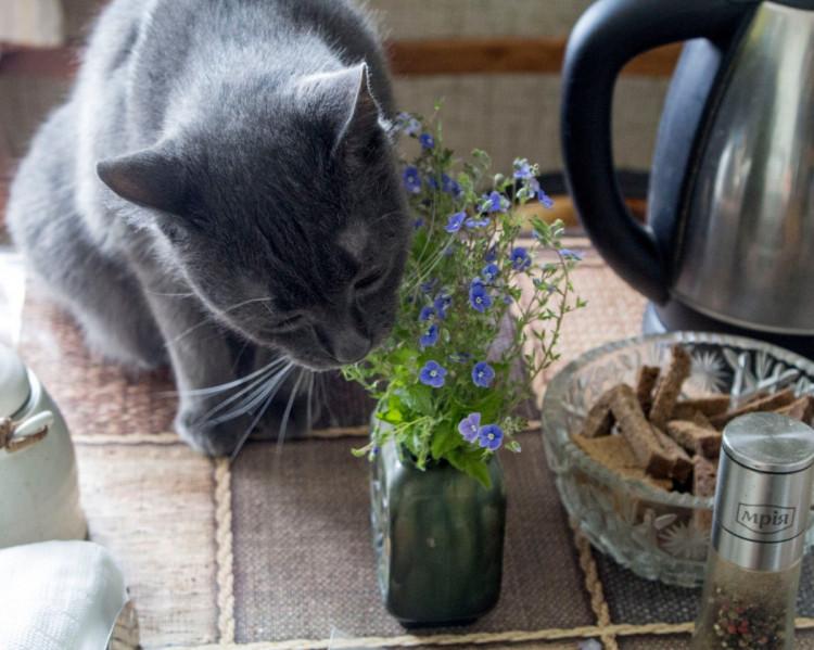 Хто в хаті хазяїн? Кіт! Фото: Сергій Бахмутов